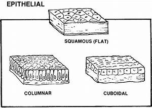 Images 03  Integumentary And Fascial Systems