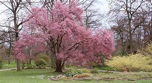 Prunus semis entretien culture et arrosage for Amenagement de piscine exterieur 14 prunus semis entretien culture et arrosage