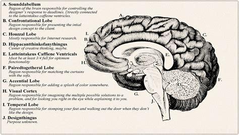 brain   designer archi fied