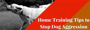 home training tips to stop dog aggression dog training With aggressive dog training tips
