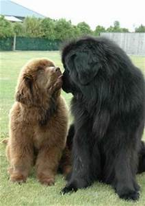 5 Large And Fluffy Dog Breeds For Families Who Want More ...