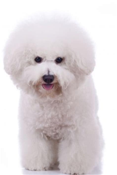white dog names    white puppy