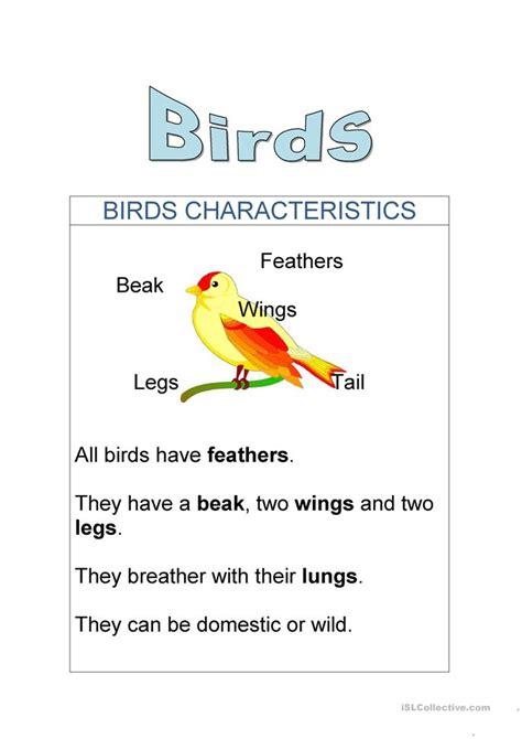 birds characteristics worksheet  esl printable