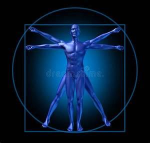 Human Diagram Vitruvian Man Isolated Stock Illustration