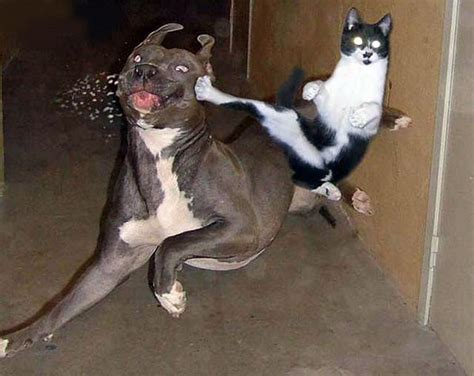 funny dog pictures dog breeders guide