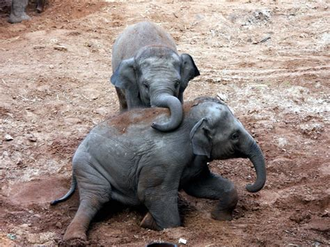 30 Cute Baby Elephants  Celebrating World Elephant Day