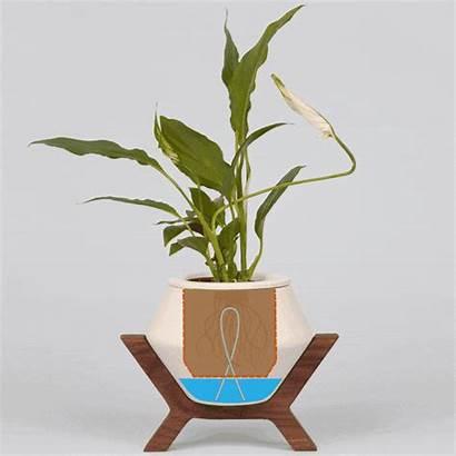 Lander Plants Planter Kickstarter Plant Air Stress