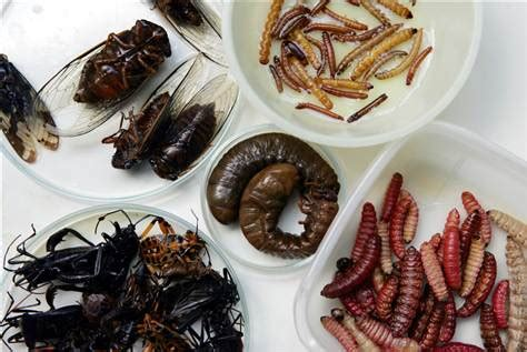 cuisine insectes comestibles bugs a lucrative market in mexico business us