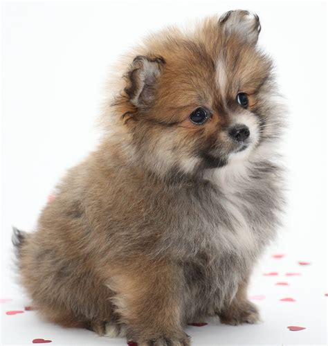 Small Dog Names  350 Ideas For Naming Your Little Puppy. Charcoal Living Room Furniture. Craigslist Living Room Furniture. Living Room Sales. Foot Rests For Living Room. Apartment Living Room Design Ideas On A Budget. Traditional Living Room. Living Room Furniture Ma. Country Living Room Curtains