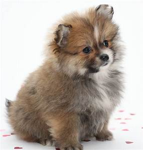 Small Dog Names - 350 Ideas For Naming Your Little Puppy