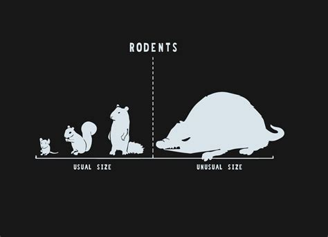 rodents  size  nathan pyle threadless