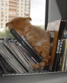 cat everywhere 15 pics that prove cats can sleep purrretty much anywhere