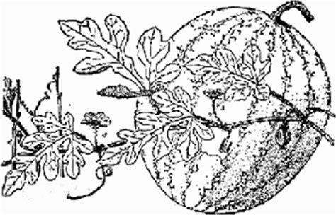 egusi lost crops  africa volume ii vegetables