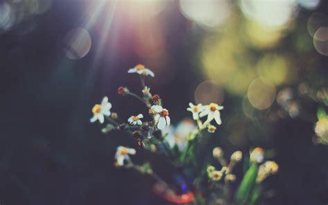 wallpaper flowers bokeh retro hd flowers