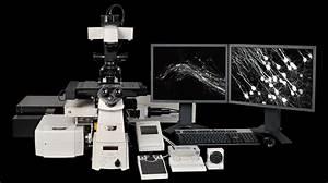 Nikon Multiphoton    Super Resolution Imaging System  U00bb Cell  U0026 Tissue Analysis Core  U00bb Mcknight