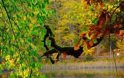 Xp Windows Feeling Wallpapers Autumn Fall Desktop