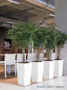 Büro Pflanzen Pflegeleicht : b ropflanzen hydrokultur gr ner ~ Michelbontemps.com Haus und Dekorationen