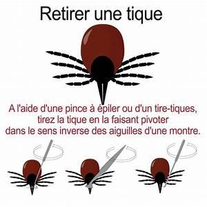 Pince A Tique : pr venir la maladie de lyme doctissimo ~ Nature-et-papiers.com Idées de Décoration