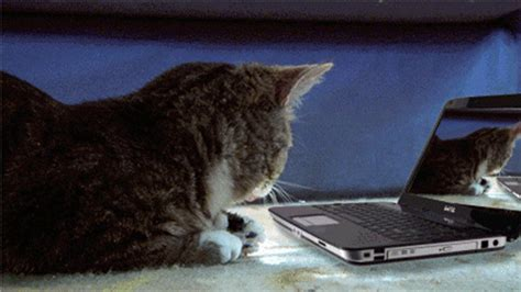 funny cat gifs find share  giphy