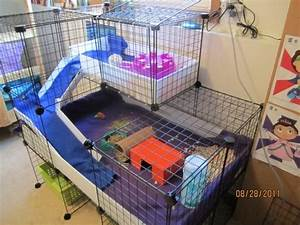 Our Setup - Guinea Pig Cage Photos | Piggies | Guinea pigs ...