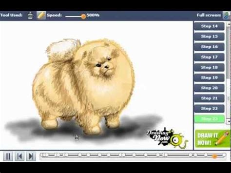 How To Draw A Pomeranian Dog You