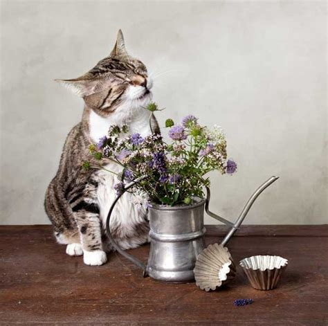 tips  dealing  seasonal skin allergies
