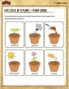 Life Cycle Of A Plant  U2013 Flash Cards