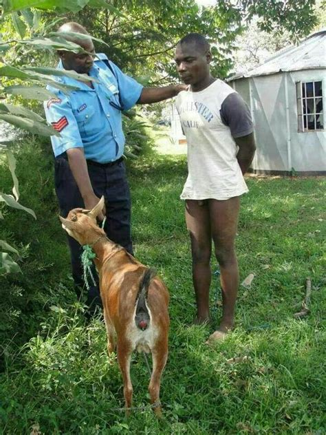 Photo Speak Guy Arrested Pants Down Doing It With A Goat