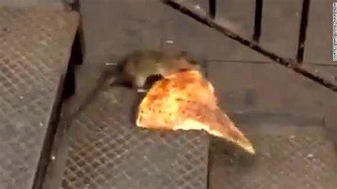 pizza rat  newest obsession cnn