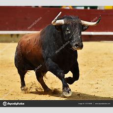 Stier In Spanien Mit Großen Hörnern — Stockfoto