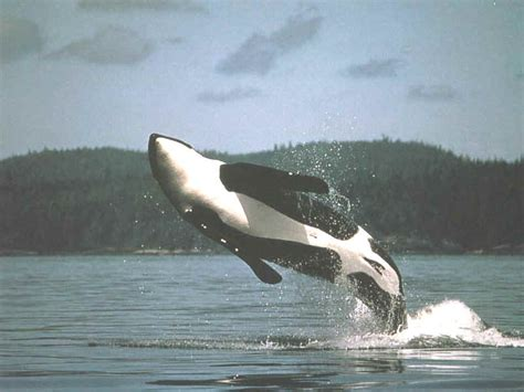 orcas island vacation rentals san juan islands deer