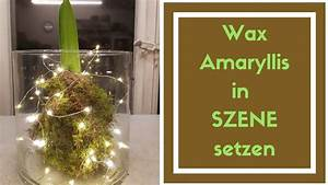 Amaryllis In Wachs Selber Machen : wachs amaryllis im glas dekorieren ostseesuche com ~ Orissabook.com Haus und Dekorationen