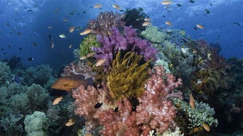 Discover an underwater rainbow in Indonesia - The Globe ...