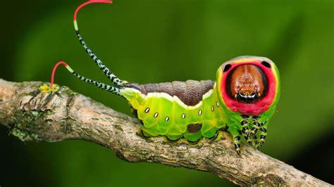 Beetle Boy's BioBlog: Top 5 Strangest Caterpillars