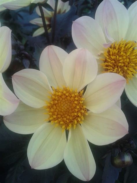 lovely flowers macro photography ladyleemanilasphotos