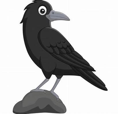 Crow Cartoon Corbeau Corvo Animados Standing Cuervo