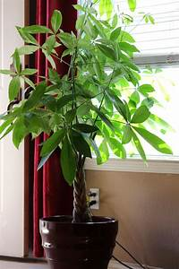 18, Gorgeous, Indoor, Plants, That, Are, Almost, Impossible, To, Kill