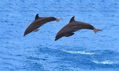 Destin Boat Tours by Enjoy Dolphin Tour In Destin Florida Getmyboat