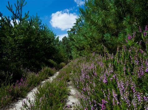 foret de rochefort en yvelines yvelines tourisme