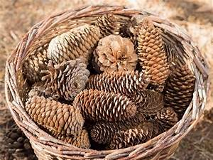17, Fun, Things, To, Make, With, Pine, Cones