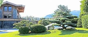 Sichtschutz Aus Pflanzen : sichtschutz aus pflanzen f r garten terrasse luxurytrees ~ Michelbontemps.com Haus und Dekorationen