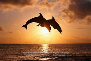 Sunset Dolphins - ThingLink