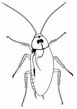 Cockroach Coloring Pages Printable sketch template