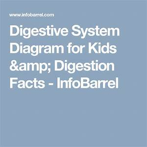 Digestive System Diagram For Kids  U0026 Digestion Facts  With