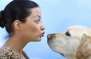 Dogs DO love their owners: Scans reveal dogs respond ...