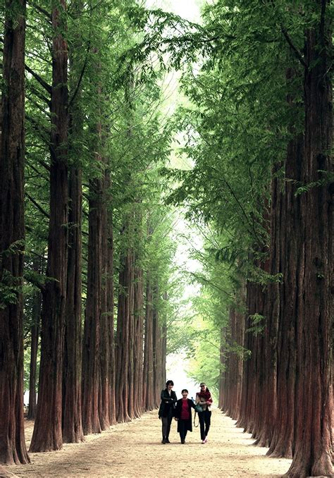 nami island  petite france private day  hab