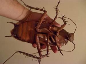 Cockroach Sculpture by Cesar Crash - What's That Bug?