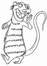 Opossum Coloring Pages sketch template
