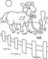 Fence Coloring Behind Sheep Pages Printable Hello Everyone Snoopy Sky Coloringsky sketch template