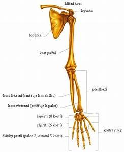 Artróza kloubu